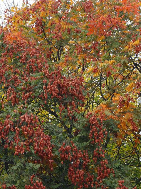 Autumn hues II