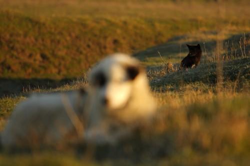 Flock watchers