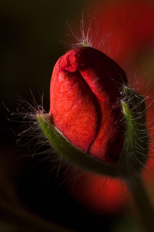 flower_bud.png